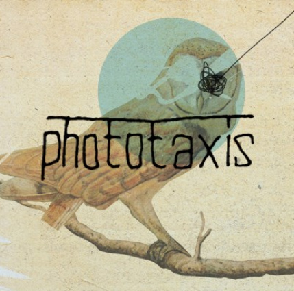 phototaxis picture
